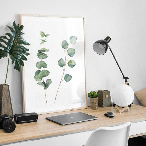 Ilustração botânica Eucalyptus